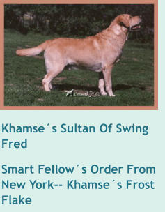 Khamse´s Sultan Of Swing   Fred Smart Fellow´s Order From New York-- Khamse´s Frost Flake