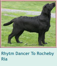 Rhytm Dancer To Rocheby  Ria