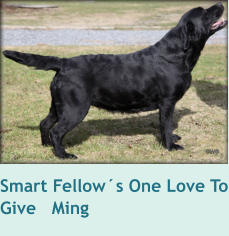 Smart Fellow´s One Love To Give   Ming