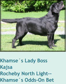 Khamse´s Lady Boss     KajsaRocheby North Light--Khamse´s Odds-On Bet