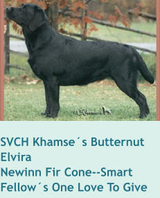 SVCH Khamse´s Butternut   ElviraNewinn Fir Cone--Smart Fellow´s One Love To Give
