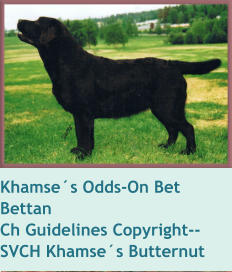 Khamse´s Odds-On Bet    BettanCh Guidelines Copyright--SVCH Khamse´s Butternut